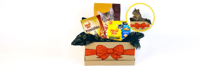 How to DIY the Purrfect Gift Box for Your Cat